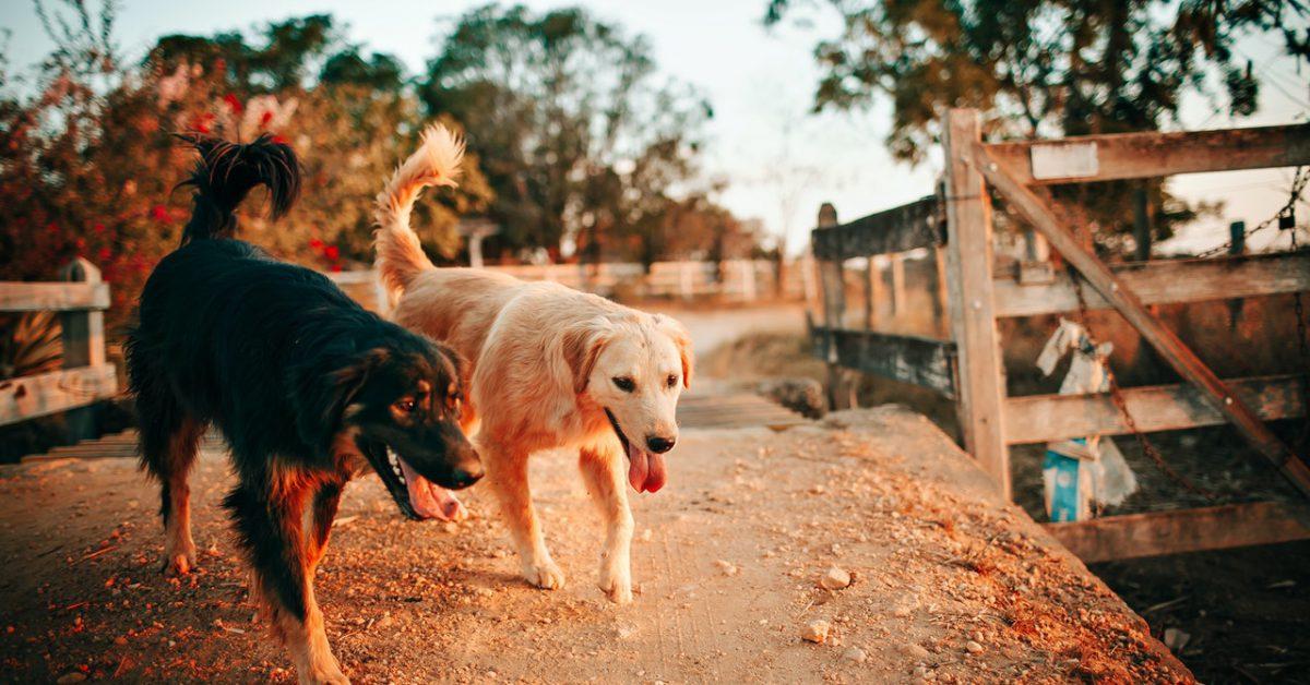 Naturalne gryzaki dla psa, dlaczego warto je wybrać?